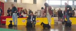 International dog show in Wels, Austria