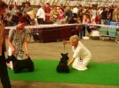 International Dog Show in Mlada Boleslav