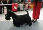 International Dog Show in Brno