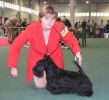 International Dog Show in Budapest