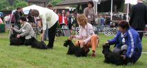 International dog show in Szilvasvarad, Hungary