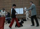 Club Dog Show in Prague