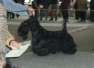 International Dog Show in Trencin, Slovakia