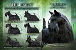30 years of breading of scottish terriers Euri - Escot
